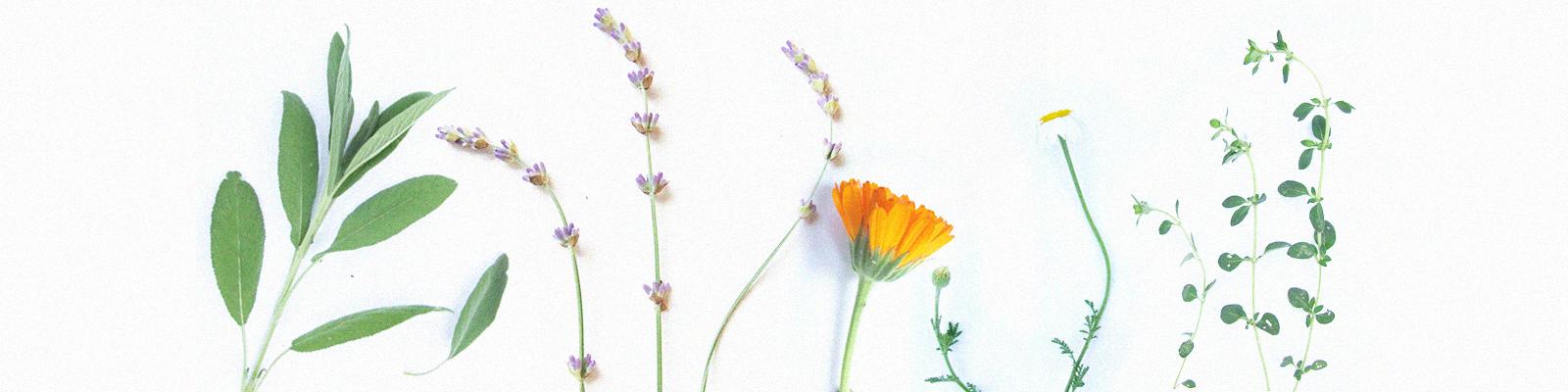 plante de la irina ingrijire fireasca